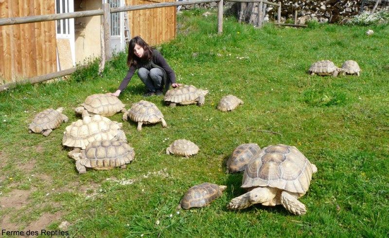 Tortue pour jardin images for Amenagement jardin pour tortue