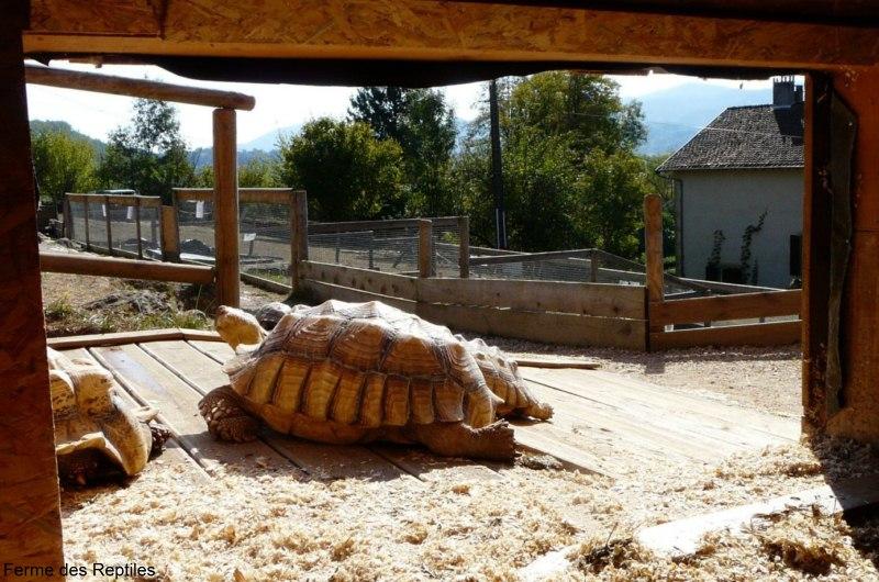 Les tortues. Maison-tortues